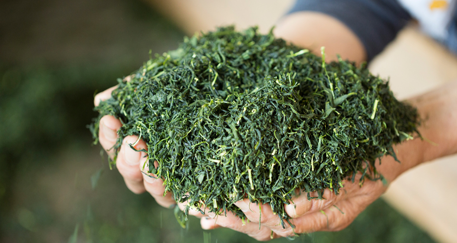 緑茶について