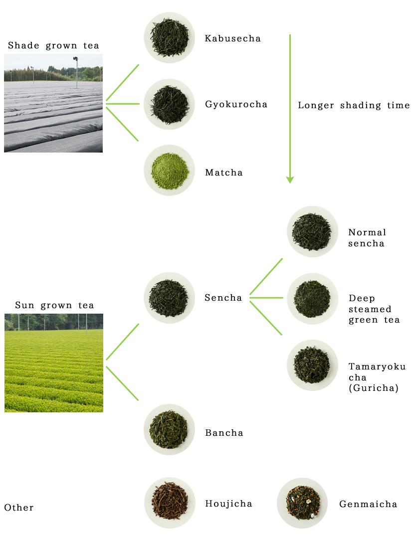 緑茶の分類