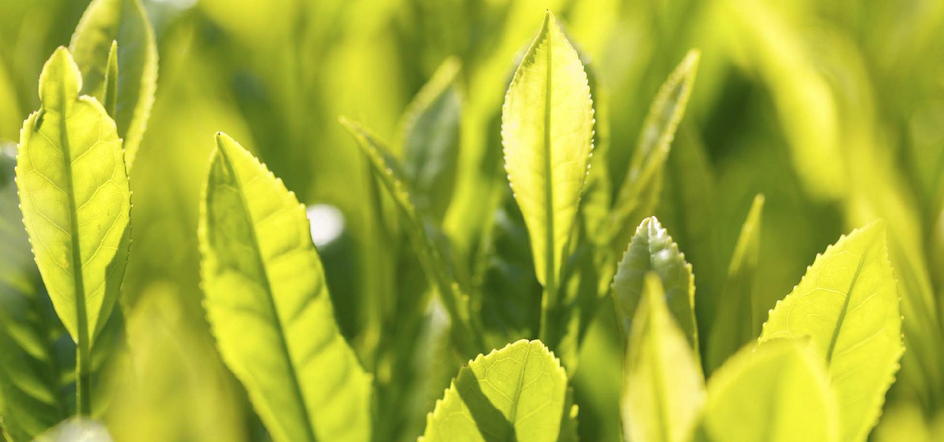 豊緑園(森本さん)